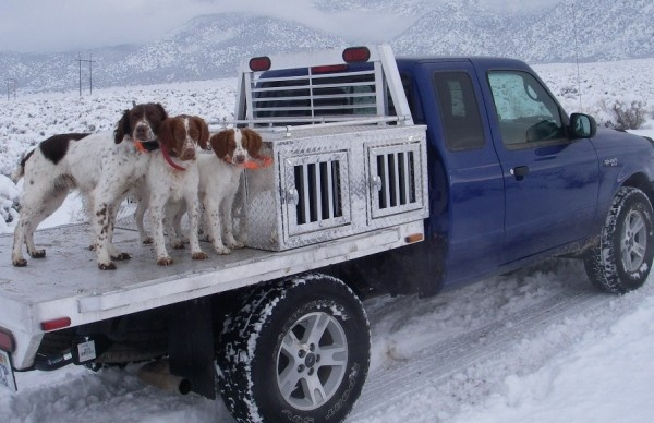 10 Best Images About Dogs Amp Trucks On Pinterest Mans