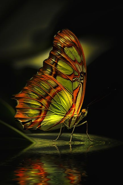colorful | butterfly