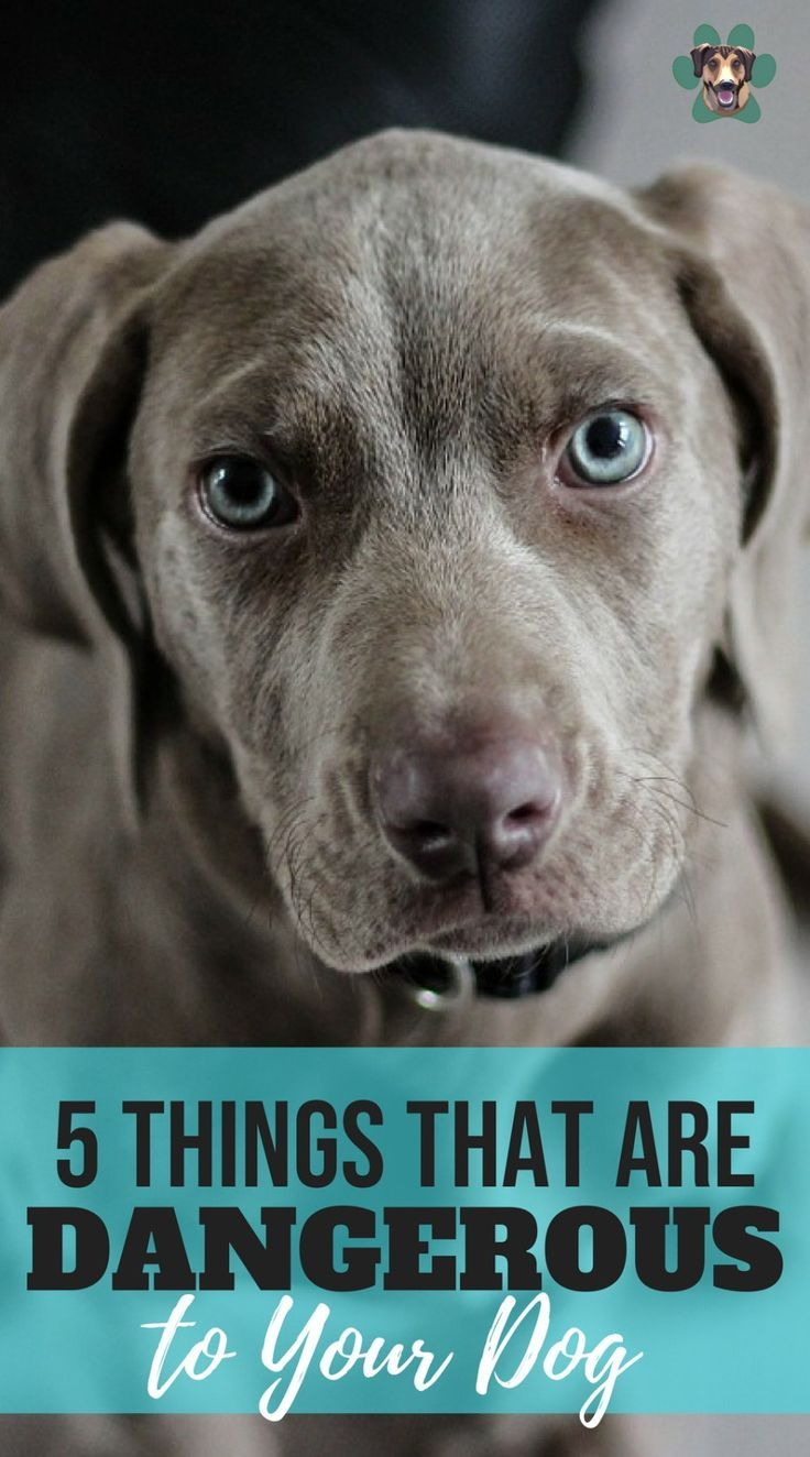 5 Things That Are Dangerous To Your Dog Dog Training Books Dogs