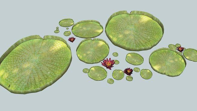 3D,nénuphar, plante, aquatique, jardin, fleur,eau, - 3D Warehouse