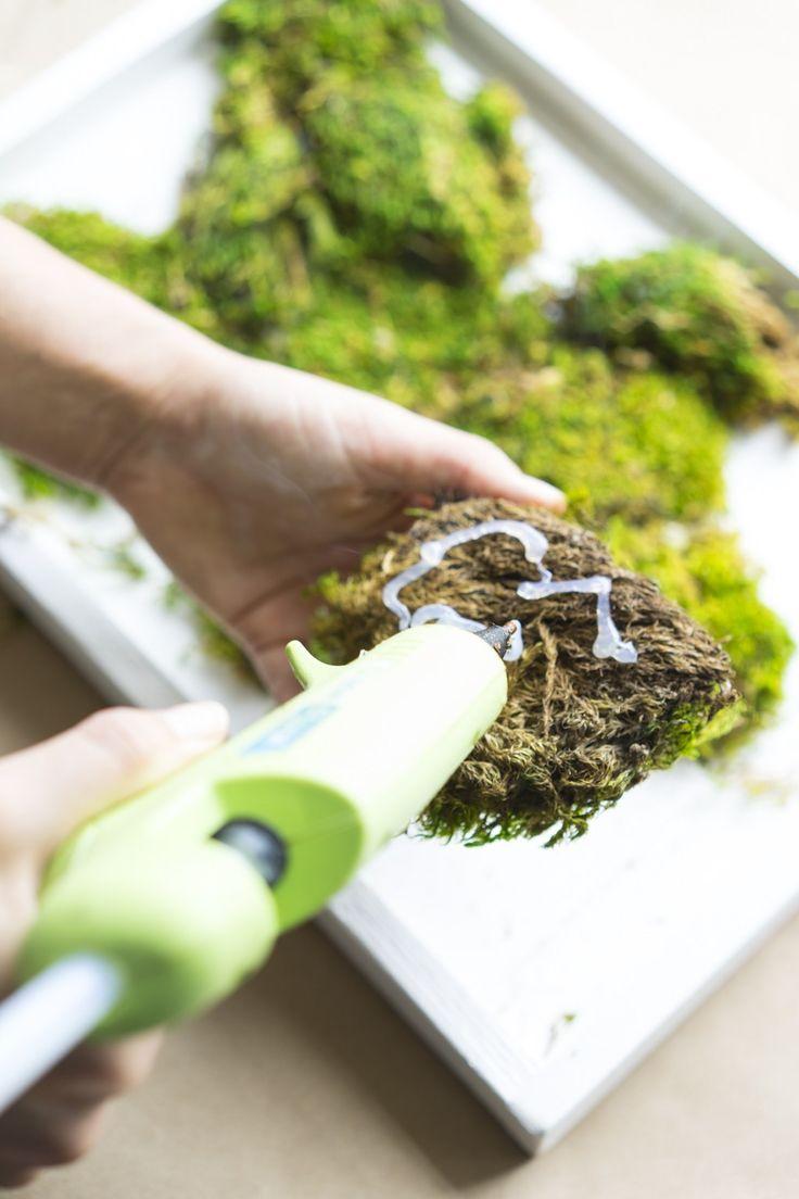 How to make a carefree moss garden jardin de mousse - Comment faire un jardin vertical ...