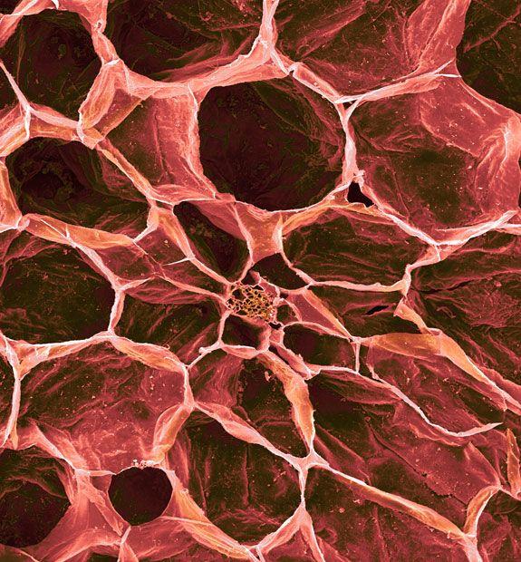 Fruchtfleisch einer Tomate im REM. Food under the microscope: scanning electron micrographs of foodstuffs