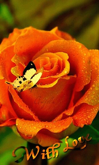 17 best images about butterflies n roses on pinterest