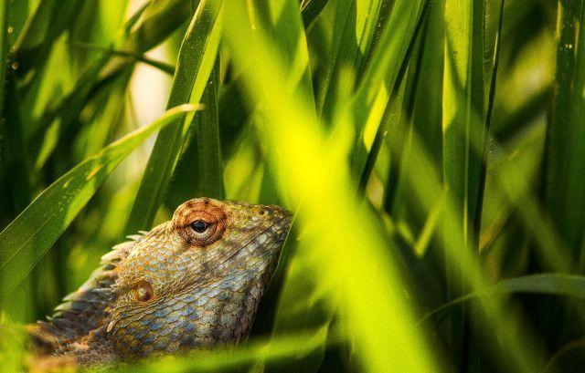 Free Photos 4k Wallpaper Animal Animal Photography Close Up Animal Animalphotograph Animal Photography Animals Wildlife Photography