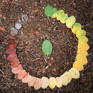 Life cycle of a leaf. Uploaded by The Diggers Club.