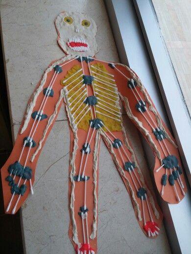4. Siniflar- Iskelet Sistemi
