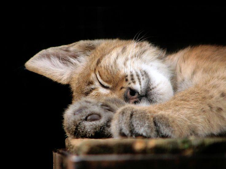 Oggi é la festa del gatto. Festeggiamo con un'adozione responsabile :) http://www.lav.it/news/oggi-e-la-festa-del-gatto