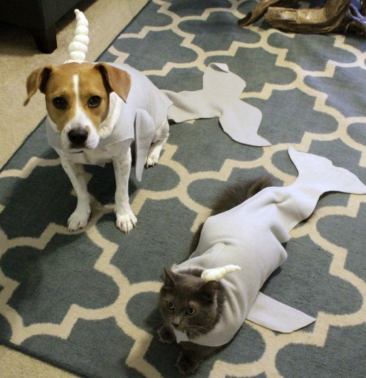 DIY cat and dog narwhal pet halloween costume tutorial - charleston crafted