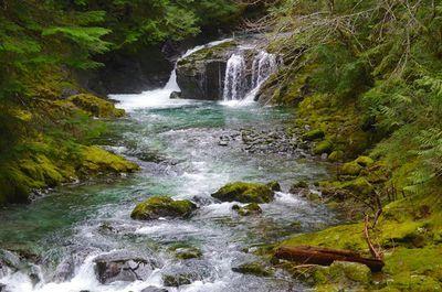 Opal Pool-Cedar Flats Hike - Portland, Oregon. Moderate (10.5 miles round trip)