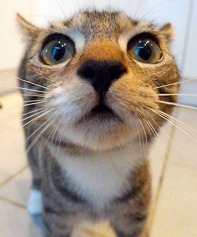 Very kyoot!  Cutest cat: Arthur