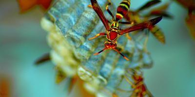 Red Wasp Repellent | eHow UK