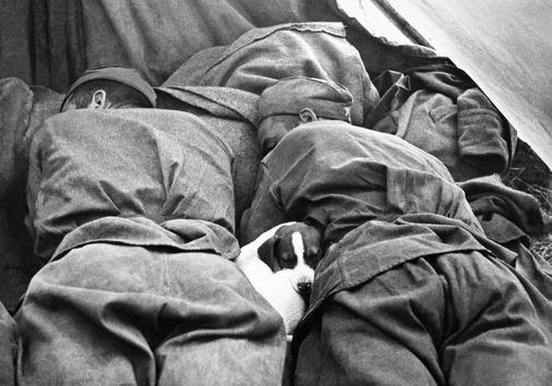 Un cachorro entre dos soldados. © RIA Novosti