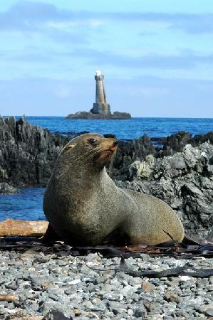 Leaning Lighthouse (Seal Coast Safari), Wellington, New Zealand