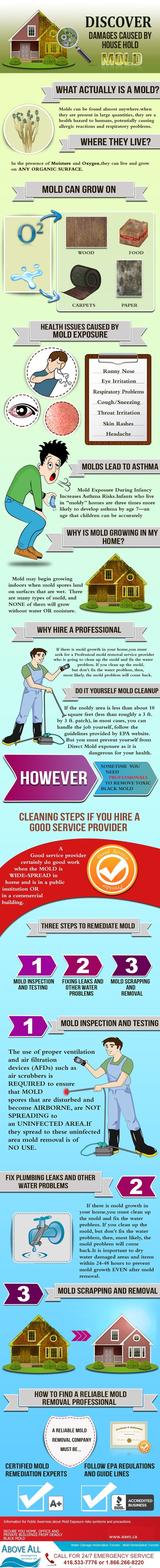 Why Mold Inspection Before Buying a Home