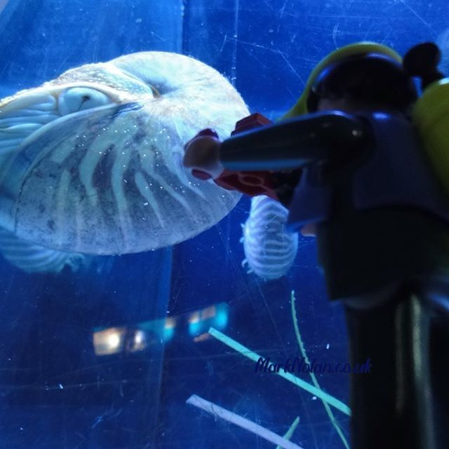 Are you smiling? Are you? #Playmobil #underwater #diver #Barcelona #aquarium
