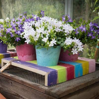Vrolijk gekleurde pot houder uit de Roots Joy serie. Gebruik de pot houder voor het kweken van tuinkruiden, bloemen, planten of groentes. D