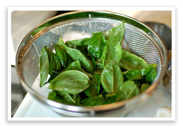 Basic Basil Pesto – Yum!