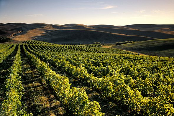Photograph of Spring Valley Vineyard - Walla Walla, Washington, USA; link to national geo article