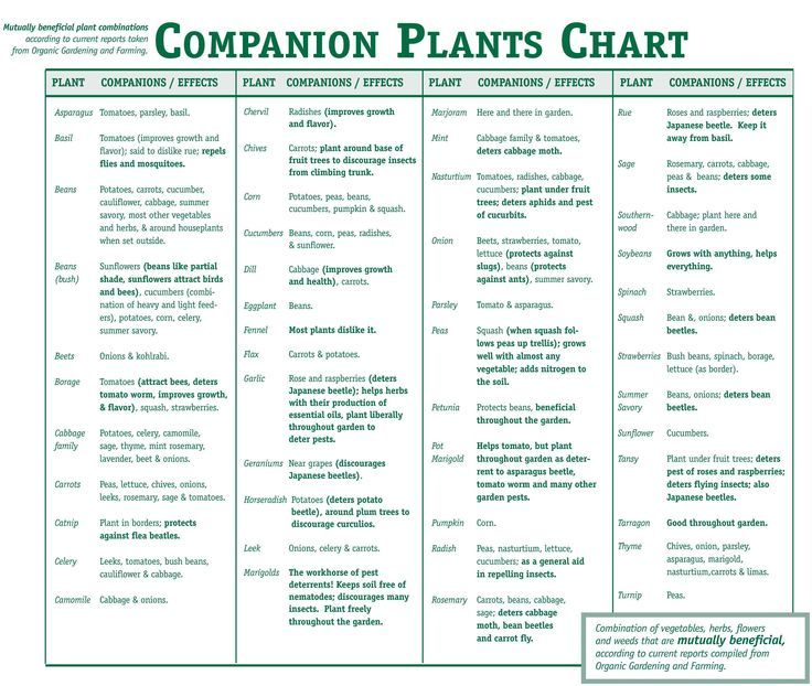 Companion Plants Chart Companion Gardening Companion 640 x 480