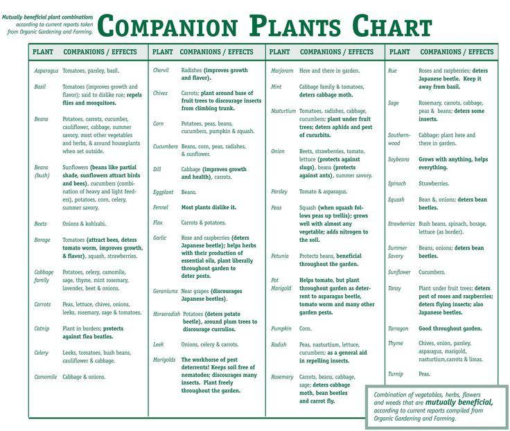Companion Plants Chart Organic Companion Gardening 400 x 300