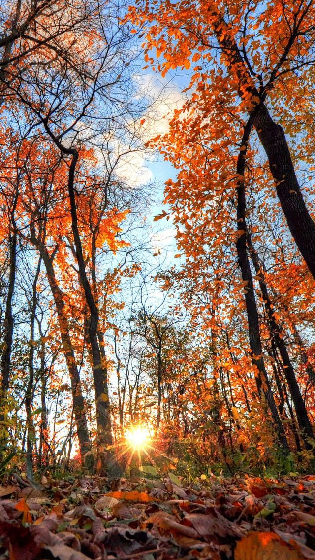 Wallpaper iPhone Autumn⚪️ Iphone wallpaper fall, Fall