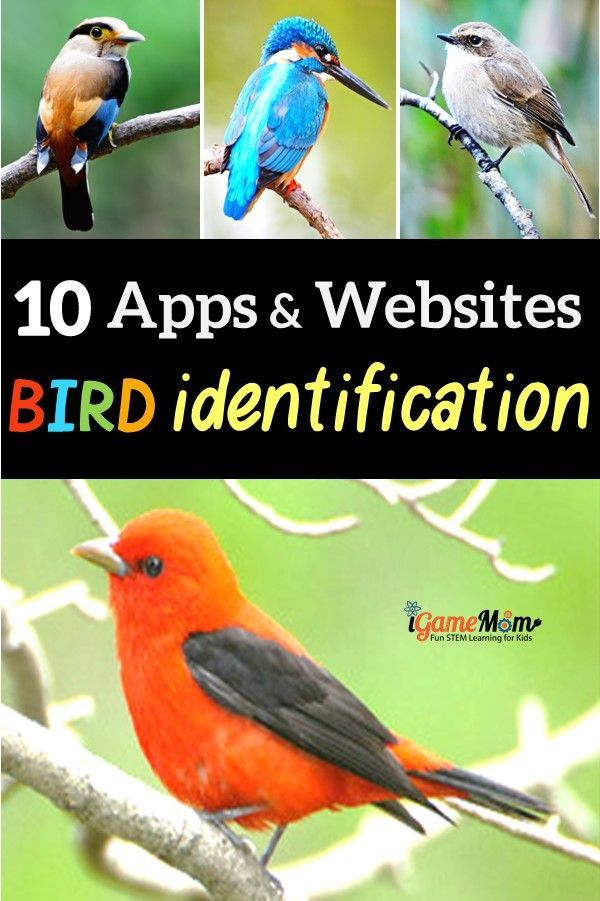 10 Apps Websites For Bird Identification Science Activities For Kids Science For Kids Learning Science