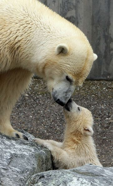 Polar Bear 42 D 25 Best 25+ Cute b...