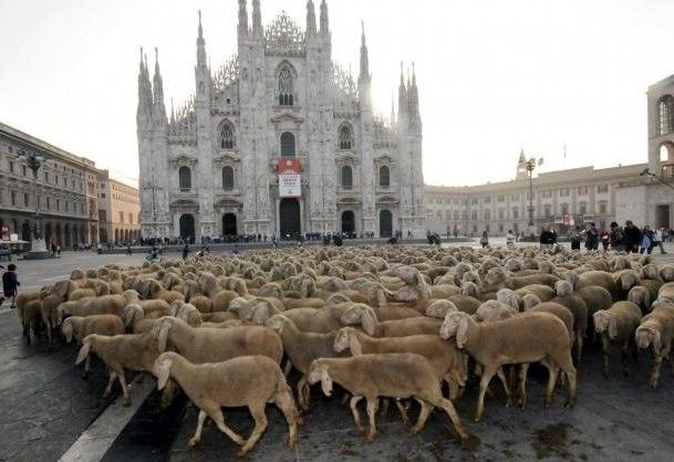 Pecore davanti al Duomo di Milano sul set de L'ultimo pastore di Marco Bonfanti