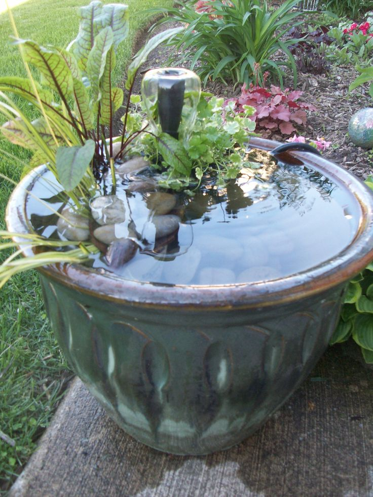 76 best container ponds ponds in a pot images on for Planting pond plants in containers
