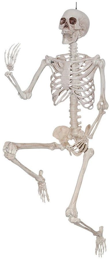 Life-size Posable Skeleton Halloween Décor
