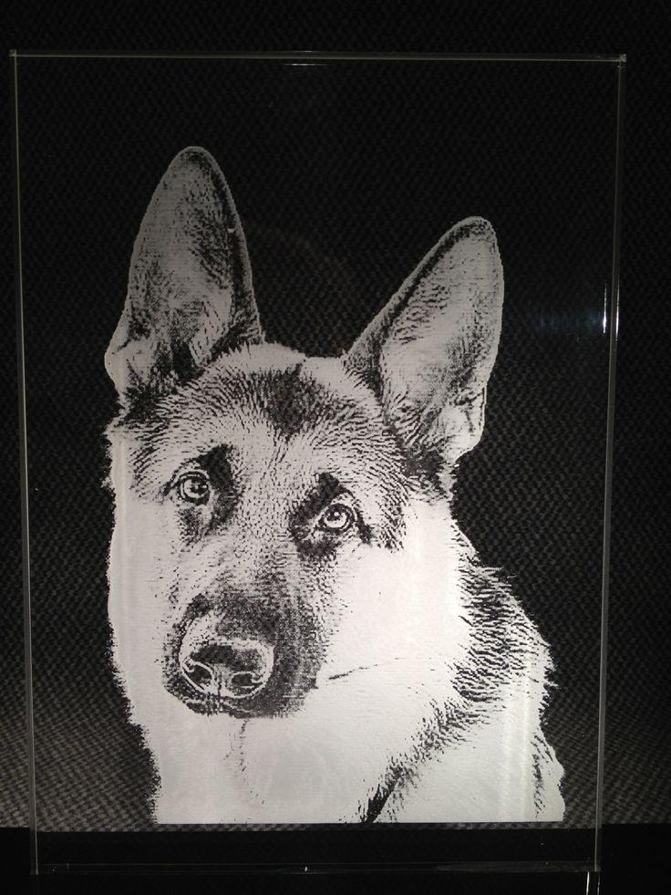 Ook huisdieren doen het goed in een gegraveerde foto led display. Uw mooiste foto of afbeelding graveren wij zo voor u.