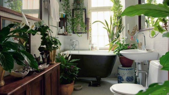 6 rostlin, které efektivně odstraní toxiny z koupelny. - Máte pocit, že je vzduch ve vaší koupelně příliš zatuchlý? Poradíme vám, co s tím.