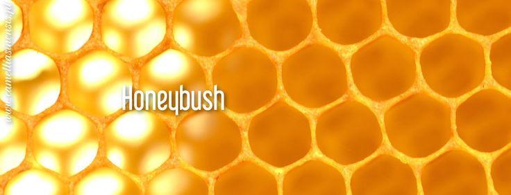 Honeybush BIO