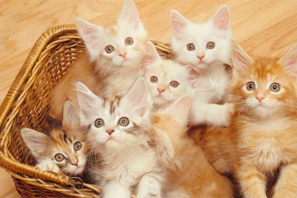 Banyak Manfaat Bila Ada Haiwan Peliharaan Sendiri Di Rumah   http://www.wom.my/ada-apa/manfaat-bela-haiwan/