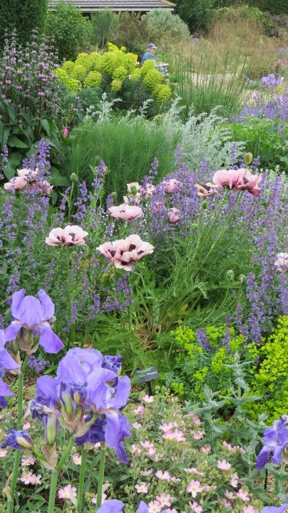 The Gravel Garden - Beth Chatto. A peach helianthemum, blue iris, salmon oriental poppy, 2 varieties of euphorbia, pink phlomis, nepeta, artemesia frigida, stipa gigantea:
