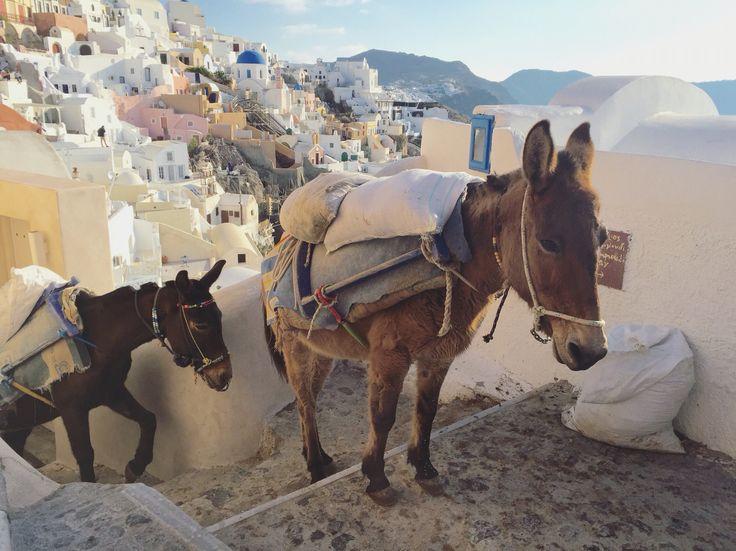 Donkeys in Santorini, Greece