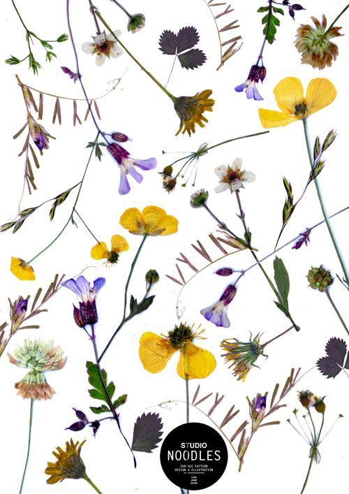 WE love Flora.Pressed Flowers. Surface Pattern Design. Floral Pattern by Studio Noodles