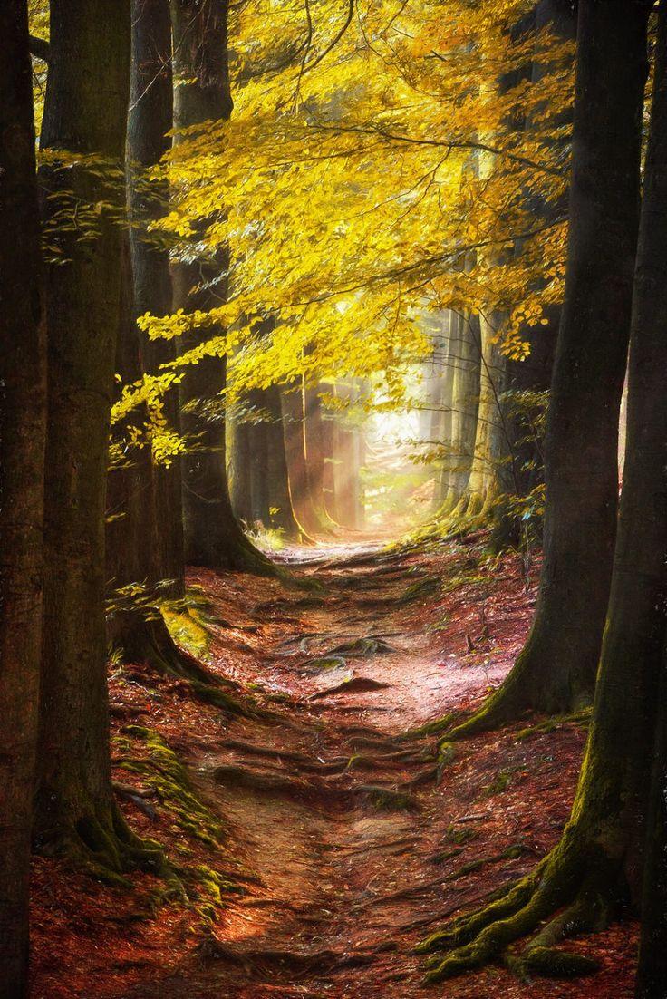 Calea misticilor