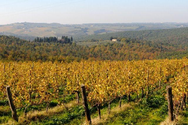 イタリアの隠れた秋。収穫後のぶどう畑の紅葉が美しいって知っていましたか?|TABIZINE