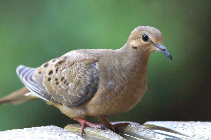Backyard Birding Guide to the San Fernando Valley ...