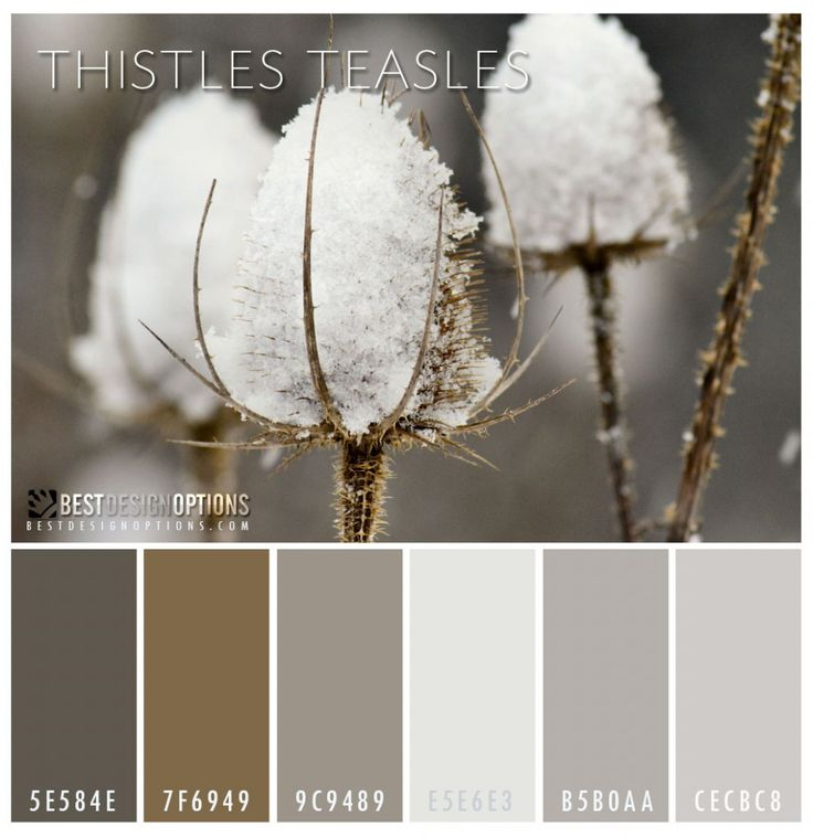 2014 Color Palettes for Winter Thistles Teasles Almost monochromatic, this color palette is ideal for minimalist designs.