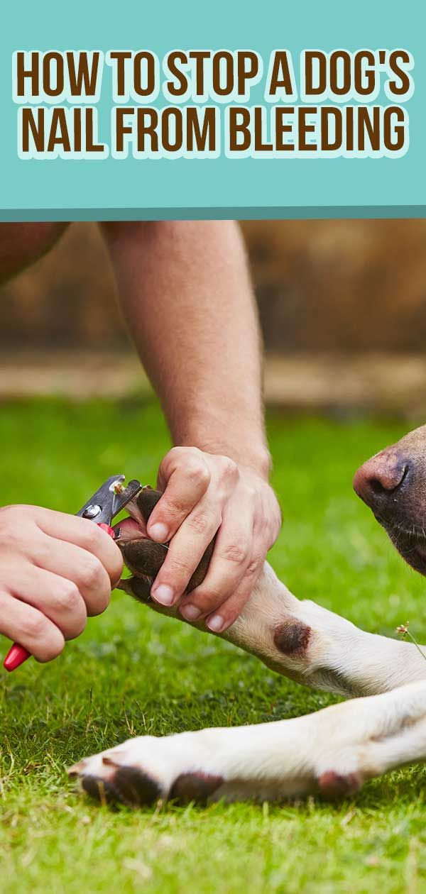 How To Stop A Dog S Nail From Bleeding Dog Nail Bleeding Dog Nails Dogs