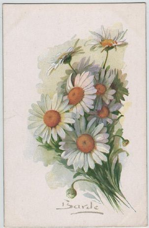 Anthemis Frutescent, c.1918 postcard