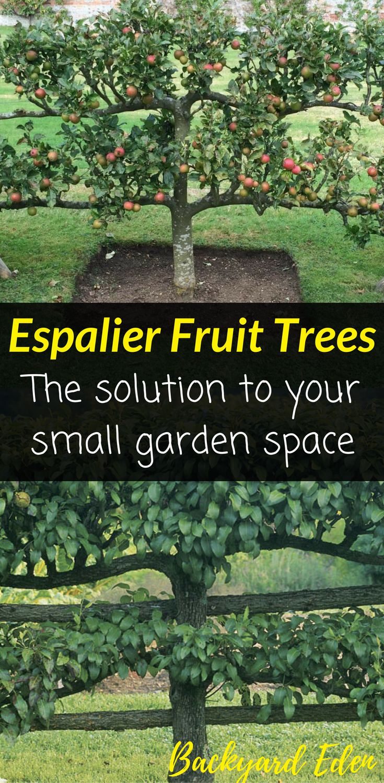 best 25 small vegetable gardens ideas on pinterest garden