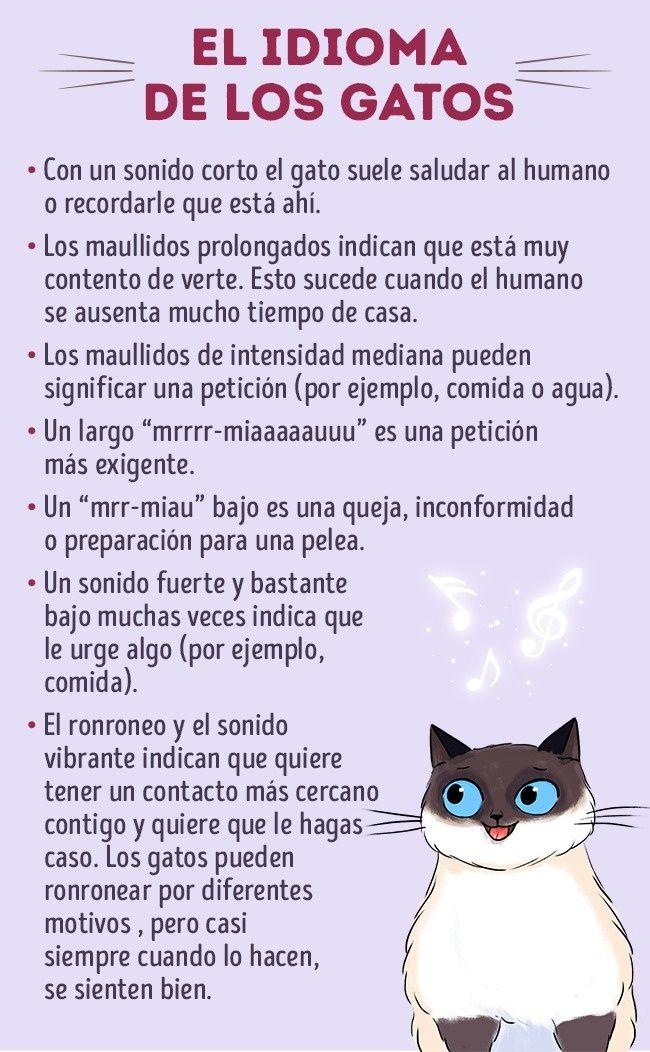 Cómo Llevarte Bien Con Tu Gato Bellezas Gatos Cuidados Informacion De Gatos Y Comportamiento De Los Gatos