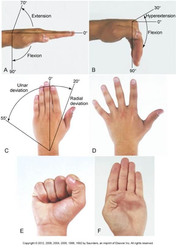Normal Rom Of The Wrist And Hand Reference Chart Fw I