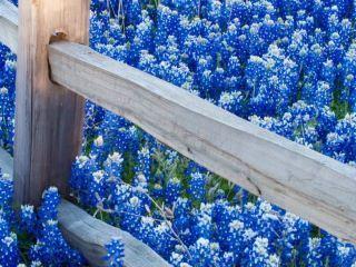fotografias de paisajes de flores , paisajes inundados de flores que formas maravillosas imagenes, flores silvestres, flores delicadas y de...
