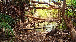 Manngarre Rainforest Walk, Kakadu National Park