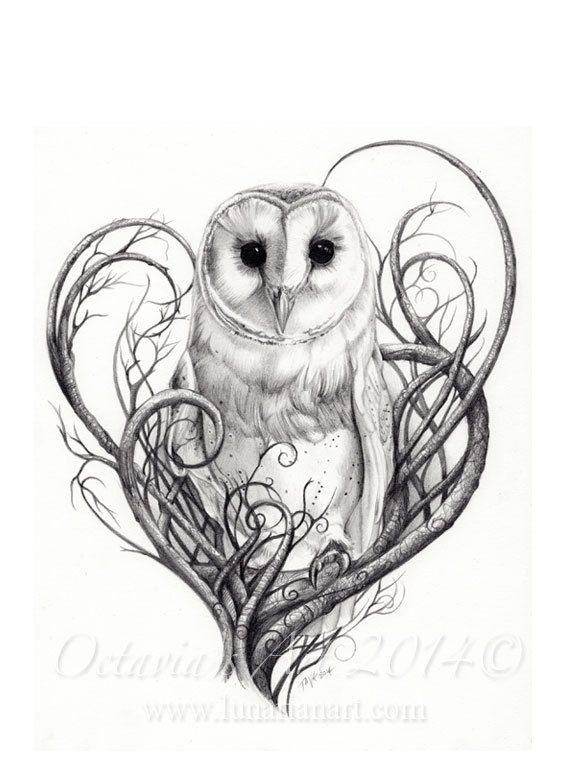 Barn Owl Print  Owls  Limited Edition Giclée Print  by Lunarianart