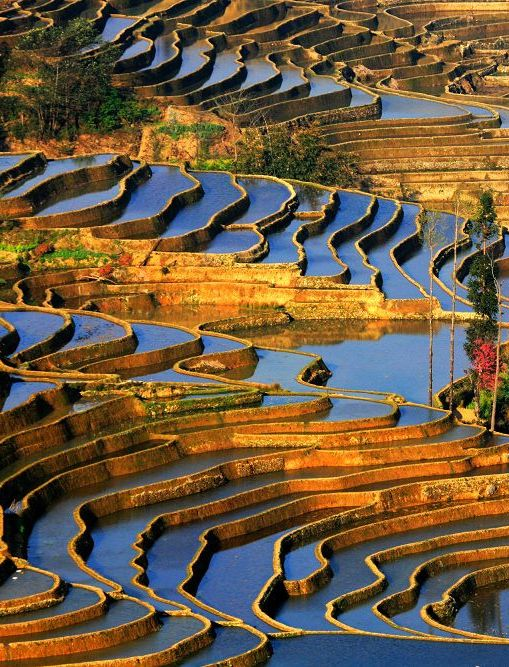 See more | Yuanyang rice Terraces,China: Make part of the garden like this if property is sloped a lot & irregularly terrace rice field